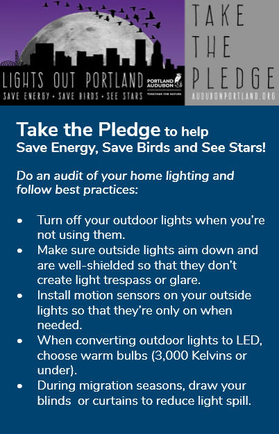 Lights out pledge infographic